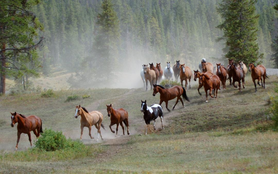 Dominanz und Alphatier-Konzepte im Pferdetraining