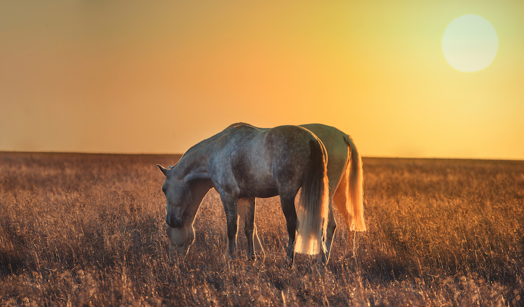 Bona Valetudine Pferde-Therapie ist LIVE